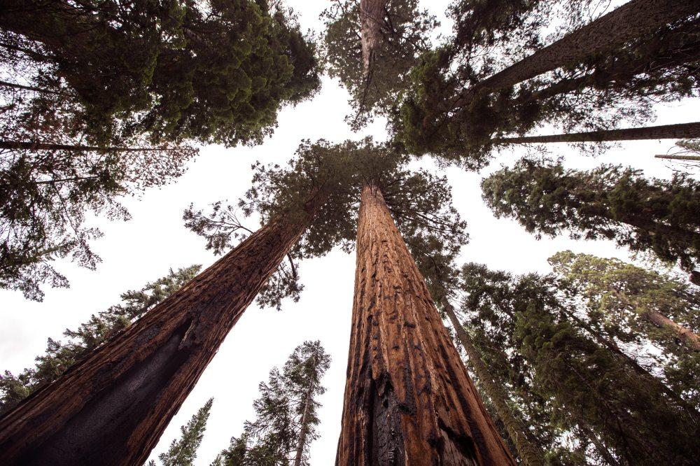 bark-forest-sky-36357