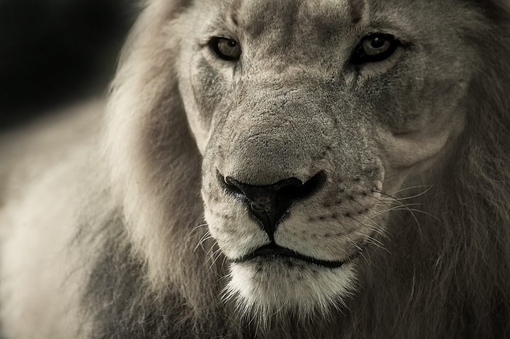animal-animal-world-black-and-white-40196