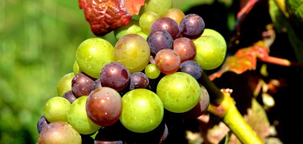 agriculture-blur-close-up-209518