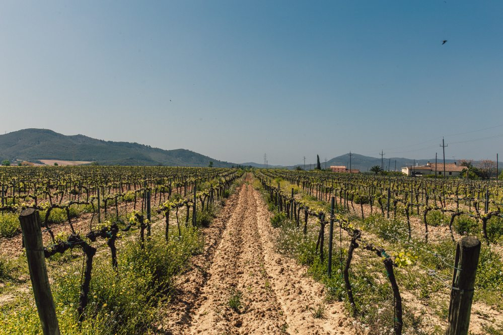 agriculture-countryside-cropland-1047327