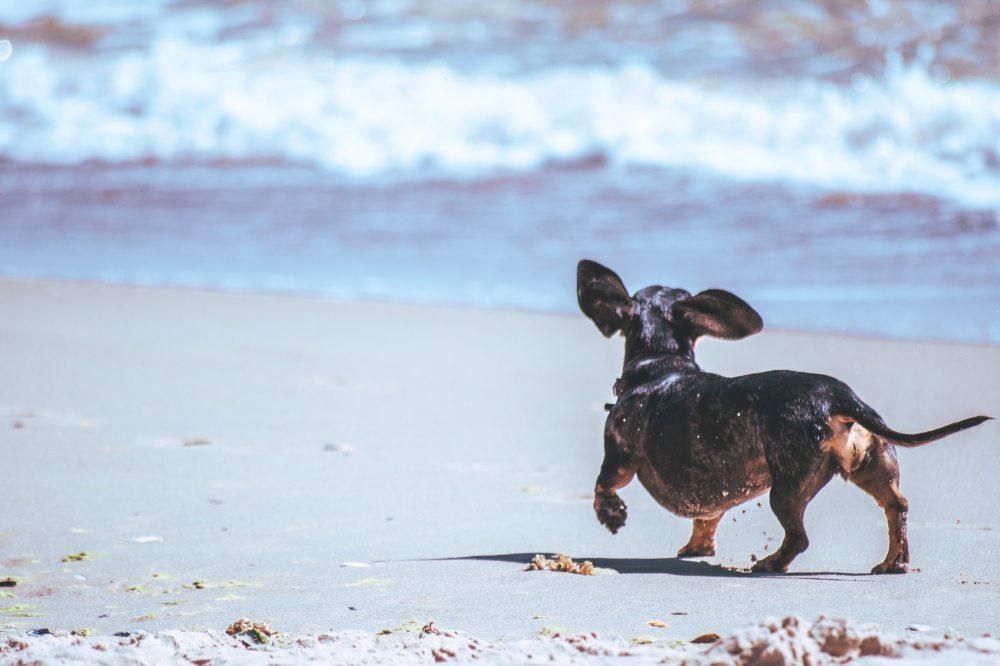 adorable-animal-animal-photography-2877832